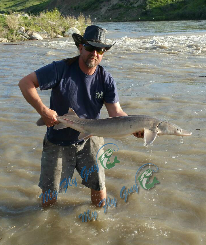 Southern Alberta Fly Fishing Guide