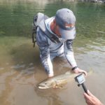 Bull Trout - Alberta Fly Fishing Guide